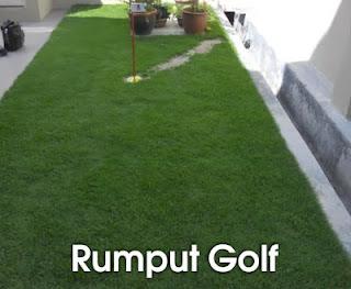 jual rumput golf