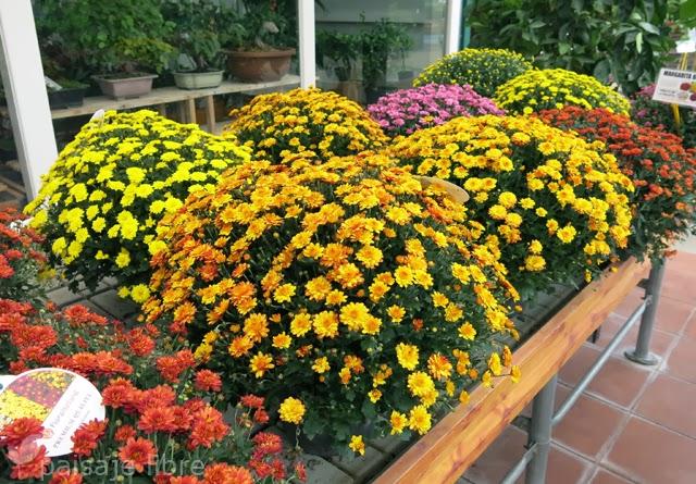 Visita a viveros projardin en alcorc n paisaje libre for Viveros plantas en temuco