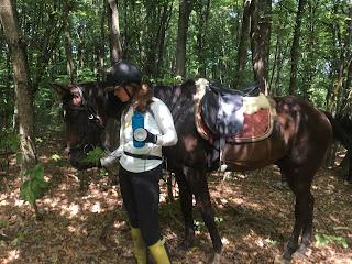 Kroatia, ratsastusloma, ratsastusvaellus, Riitta reissaa