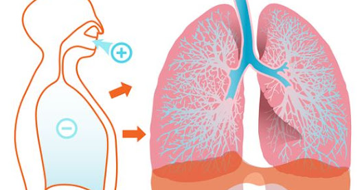 TOP 5 BEST FOODS AND HERBS FOR LUNG HEALTH