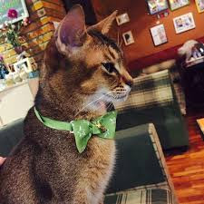 Different Kinds Of Cat Collars