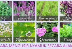 Cara Mengusir Lalat Di Rumah Secara Alami Rumah Kebun