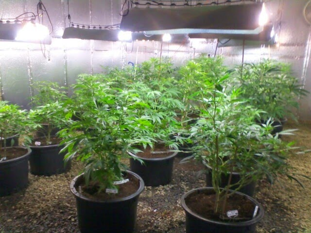 Cfl Grow Lamps For Plants