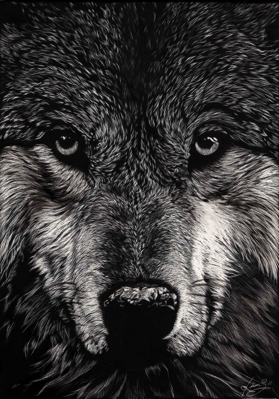 15-Wolf-Allan-Ace-Adams-Scratchboard-Drawings-of-Wild-Animals-www-designstack-co