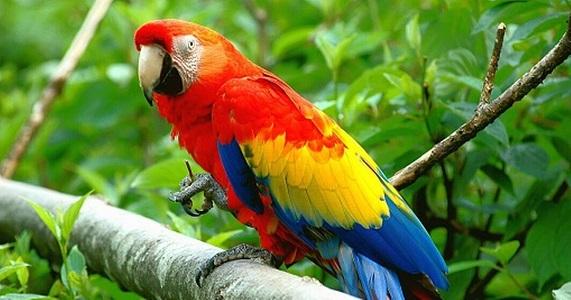 Papağanların Özellikleri ve Hakkında Bilgi