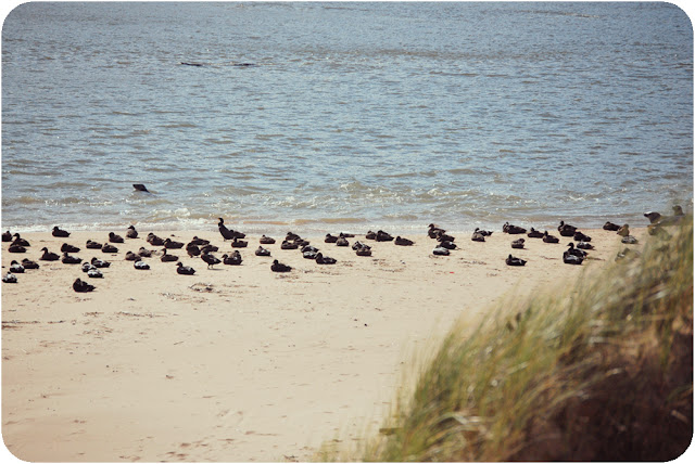Seals on Newburgh beach Aberdeenshire