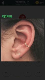 Женская ушная раковина, на которой хрящ и кольца закреплены