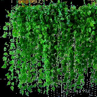 enredadera,muro,ivy,plantas,png,vegetación.follaje,nature