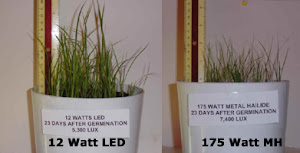 Growth proving superior photosynthetic growth of plants, aquarium