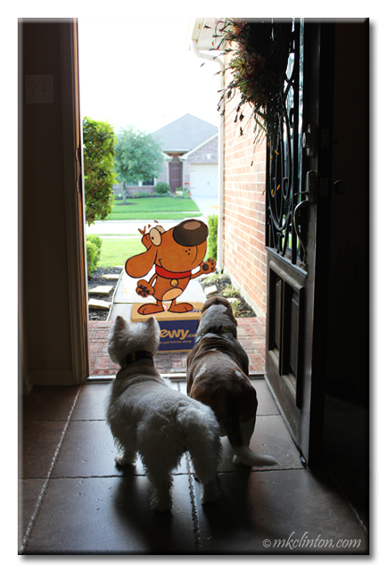 Westie and Basset answering front door to Chewy.com mascot