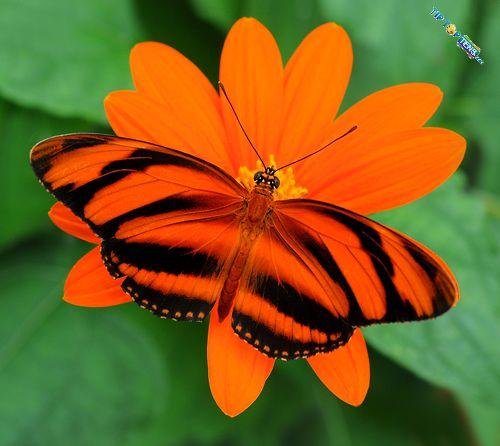 Vivien's: 10 Most Beautiful Species of Butterflies