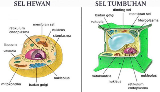 Bagian - Bagian Sel Hewan dan Tumbuhan