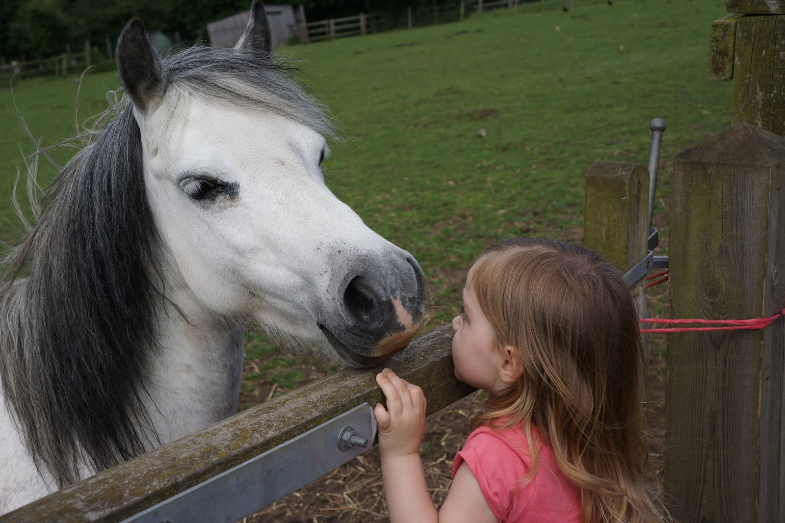 horse and toddler face to face