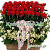 Παρασκευή 13 Οκτωβρίου 2017 🌸🌸🌷  Σήμερα γιορτάζουν οι: Καρπός,Αγαθονίκη,Χρυσή,Χρύσα,Χρυσαλία,Χρυσαυγή,Χρυσούλα,Σήλια,Χρυστάλλα,Χρυσταλλία,Φλωρέντιος,Φλωρέντης,Φλωρέντος,Φλορέντσος,Φλωρεντία,Φλωρέντα,Φλωρένα,Φλώρινα,Φλωρένσα,Φλωρέντζα,Ντία ..giortazo.gr