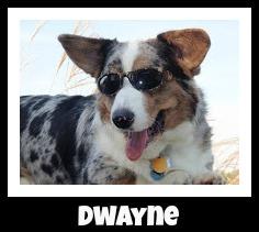 Rock Dog Pet Gw