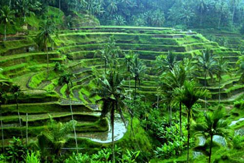 Desa Ubud di Bali 2