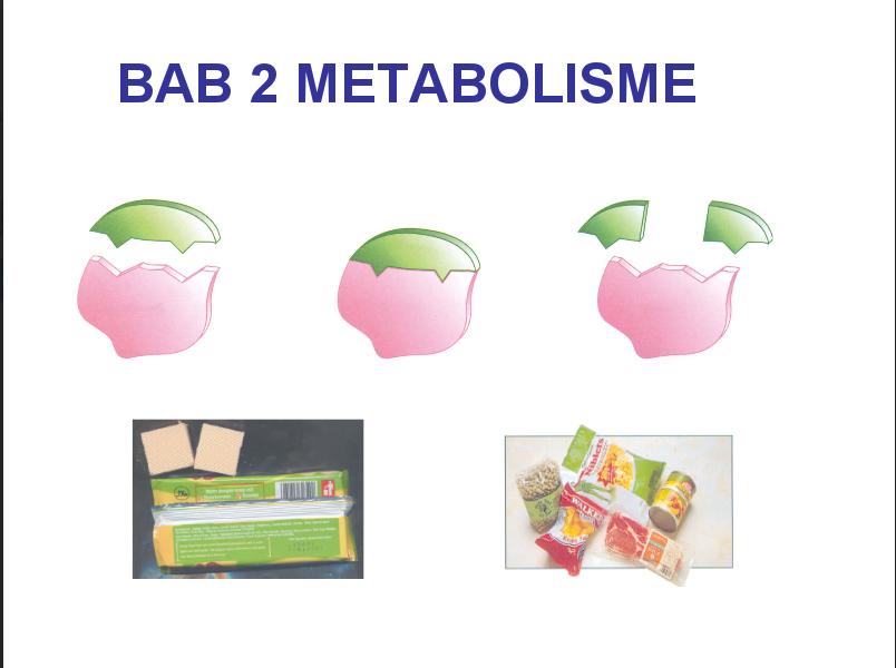Pengertian Anabolisme Dan Contoh Anabolisme