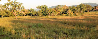 Kanha landscape is very good for tigers