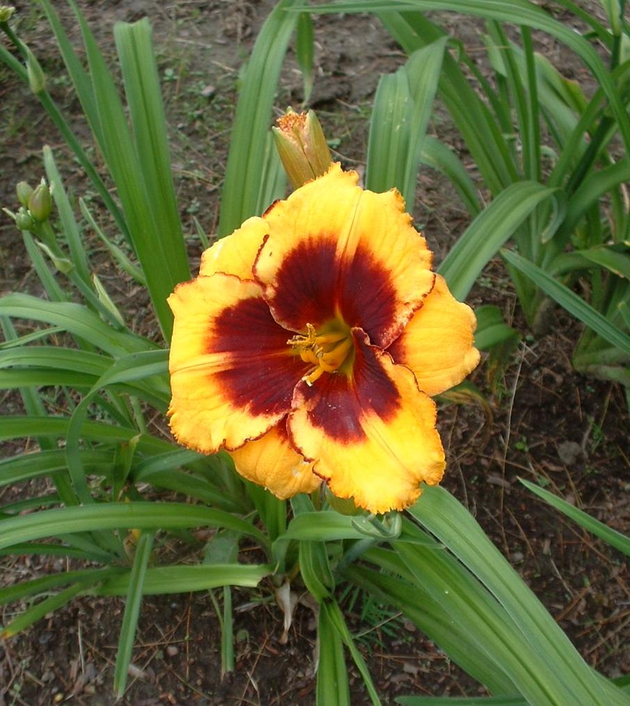 Gardening In Vermont Perennials And Annuals