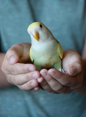 Lovebird personalities