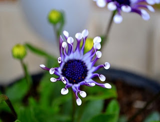 bunga-alien