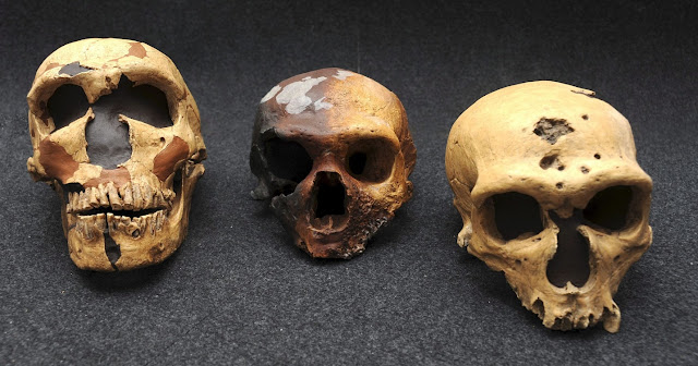 New tools identify key evolutionary advantages from ancient hominid interbreeding
