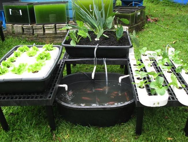 Backyard Gardening For Profit - Advance Secret Revealed
