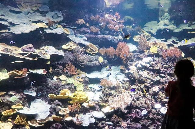 cineaqua-aquarium-avis