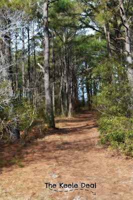 Path on Assateague Island