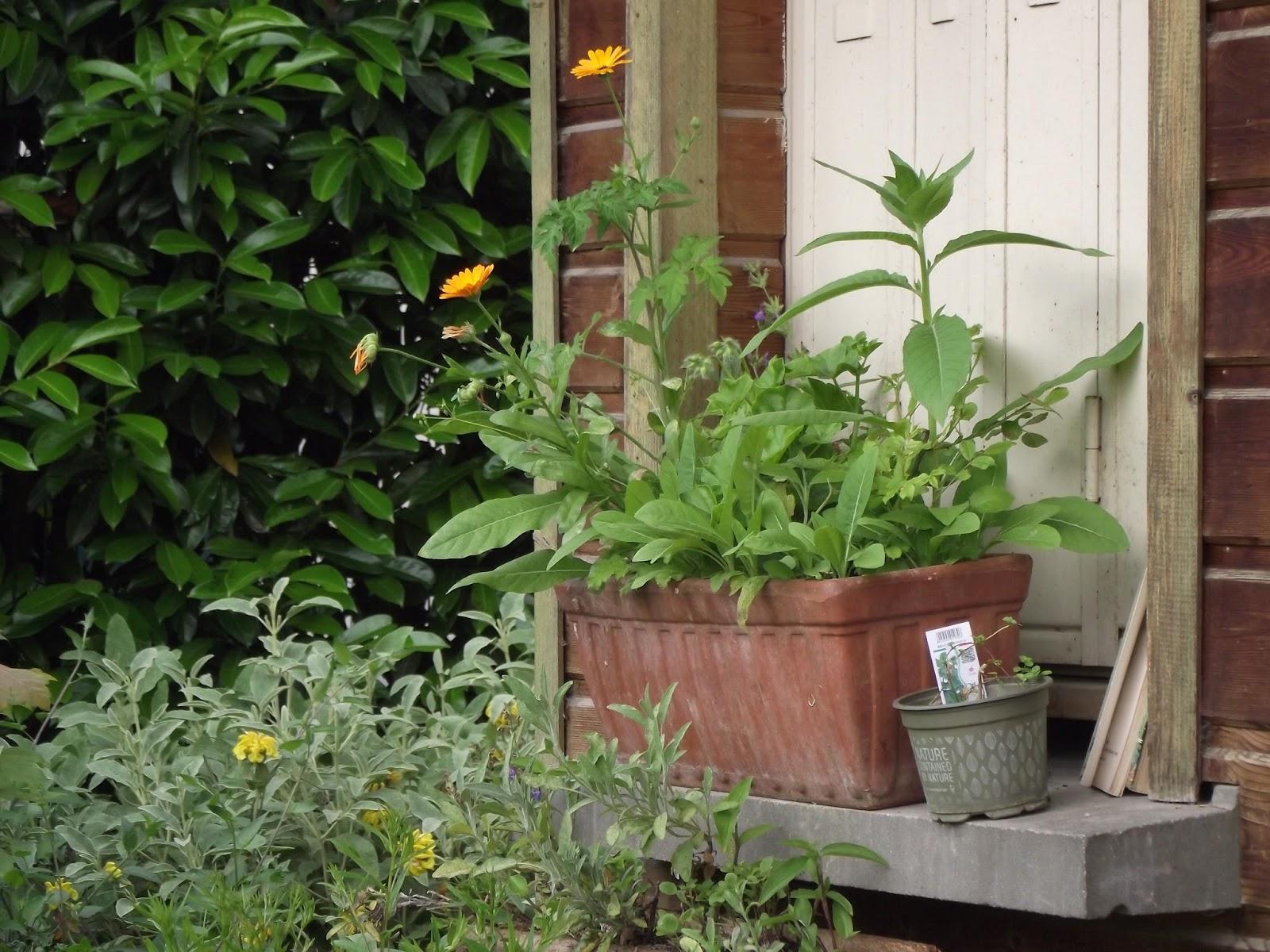 Le jardin villemin un jardin de campagne entre gare et for Jardin villemin