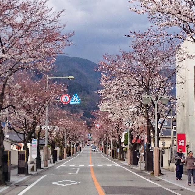 甲府 武田通り 桜