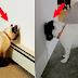 Si tu perro o gato hace esto, llévalo urgentemente al veterinario, puedes salvar su vida.