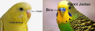 jenis Burung Parkit