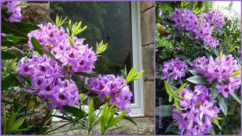 Despetitsriens3 au jardin le printemps des fleurs for Au jardin des fleurs
