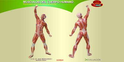 http://www.eltanquematematico.es/CM6/cuerpo/muscuerpo.html