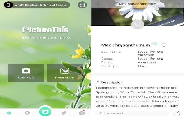 Pernah menemukan foto tanaman atau tanaman yang tidak dapat kamu identifikasi Hebat, Aplikasi ini bisa mengidentifikasi nama dan jenis tanaman