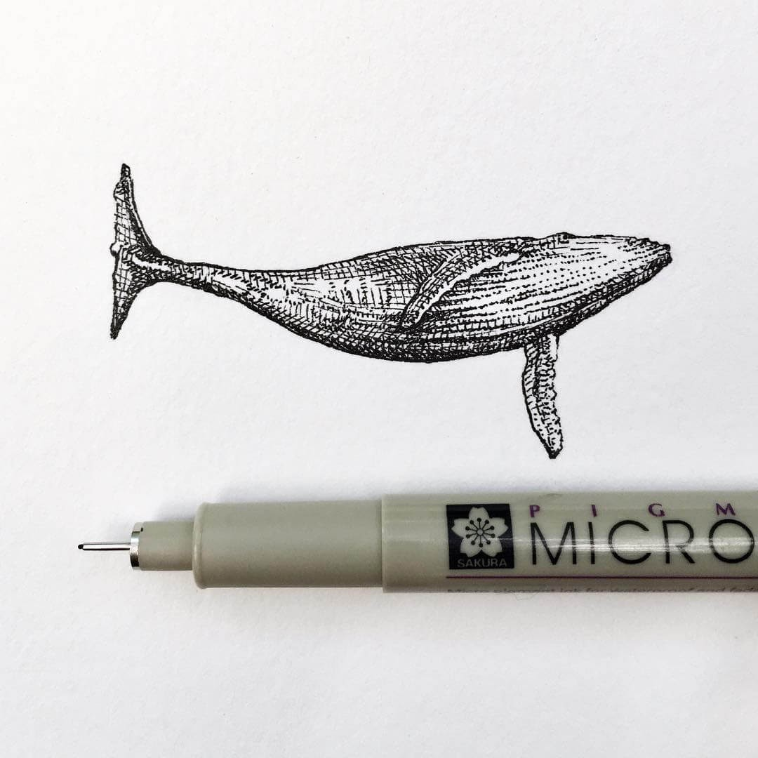 09-Whale-Bryan-Schiavone-Tiny-Animals-in-Pen-and-Ink-Drawings-www-designstack-co