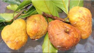 gambar buah kwai muk