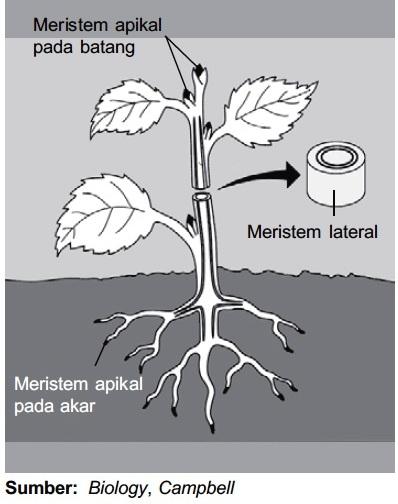 Jaringan Pada Tumbuhan : jaringan, tumbuhan, Macam, Jenis, Jaringan, Tumbuhan