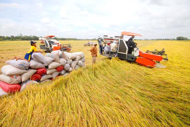 """Résultat de recherche d'images pour """"xuất khẩu gạo"""""""