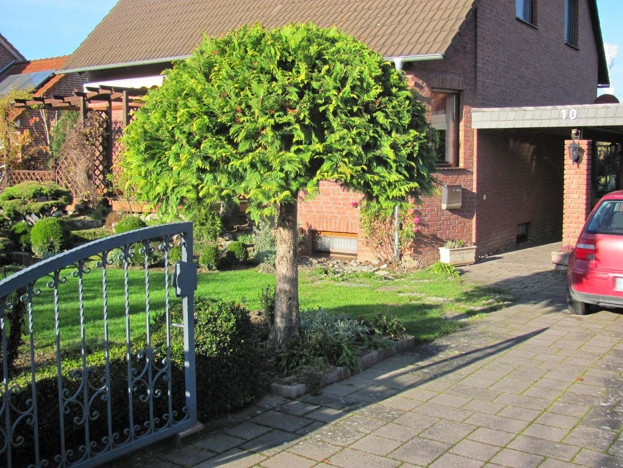 lebensbaum hecke schneiden thuja hecke pflanzen und pflegen der wohnsinn pflege lebensbaum. Black Bedroom Furniture Sets. Home Design Ideas