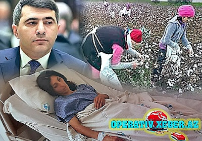 İnam Kərimovun zəhərli sınağı: ölkə boyu pambıq həbsləri gedir