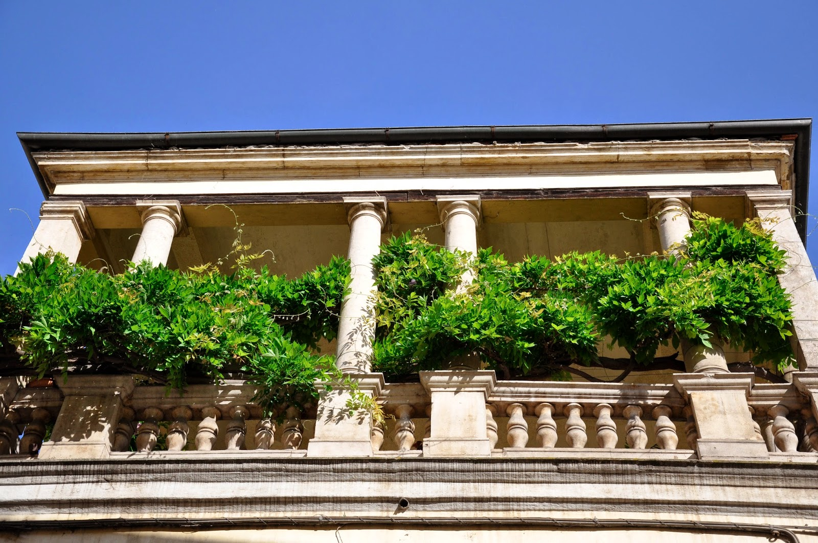 A loggia draped in greenery in Vicenza, Italy
