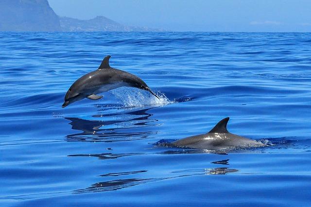 lumba-lumba pantai lovina