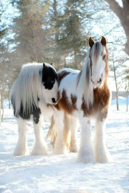 Beautiful winter scene with horses in snow