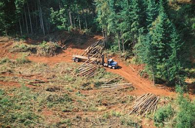 Resultado de imagen para PROBLEMAS de la deforestacion