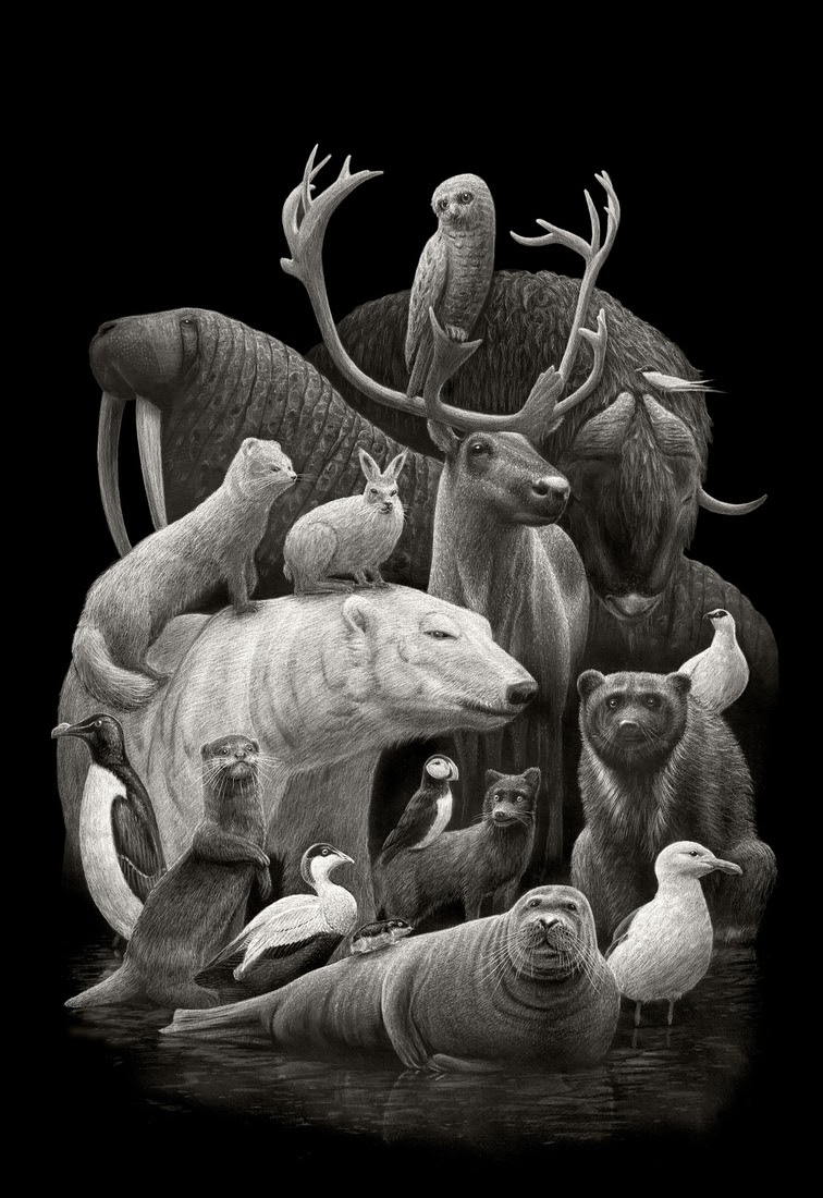 01-Arctic-Fauna-Børge-Bredenbekk-Eclectic-Subjects-in-Realistic-Pencil-Drawings-www-designstack-co