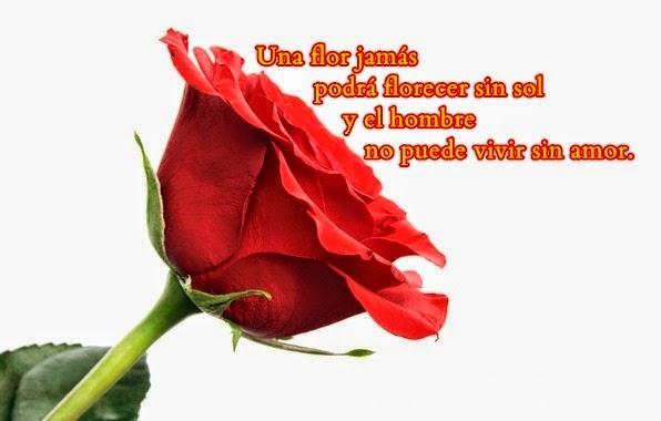 Rosas Bonitas Con Frases Imagui