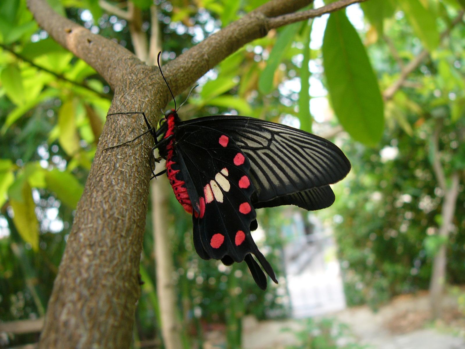 21 mooie kleurrijke vlinder - photo #46