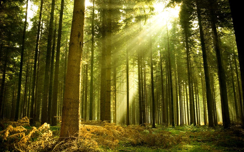 Fall Wallpaper 4d Фотографии от профессионалов Российские леса 8 фото
